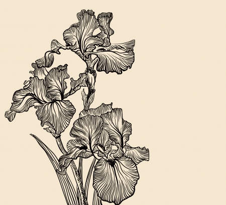 Vector decorative designs of iris flowers Vector