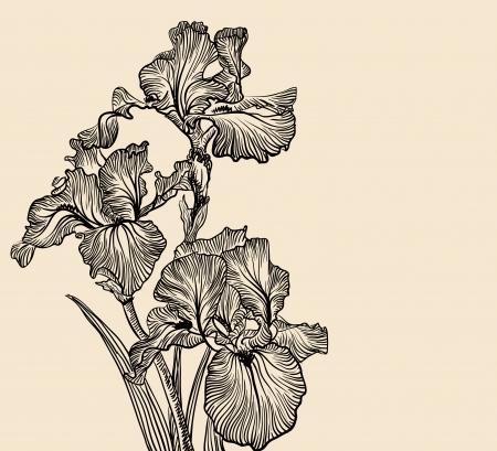 iris: Vector decorative designs of iris flowers