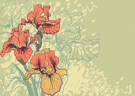 Vector decorative designs of iris flowers