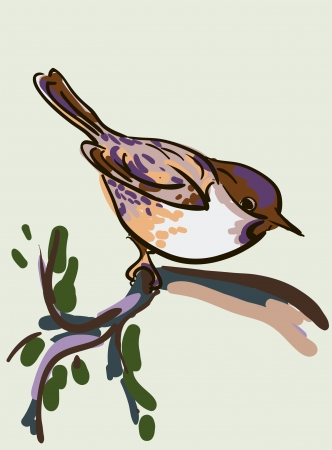 Vector drawing of the bird Vector