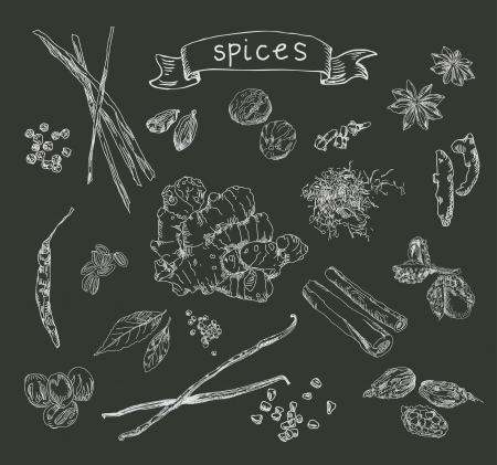 Hand drawn spices Illustration