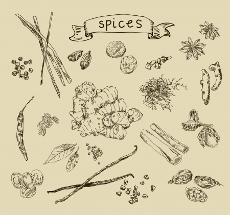 Hand drawn spices Vector