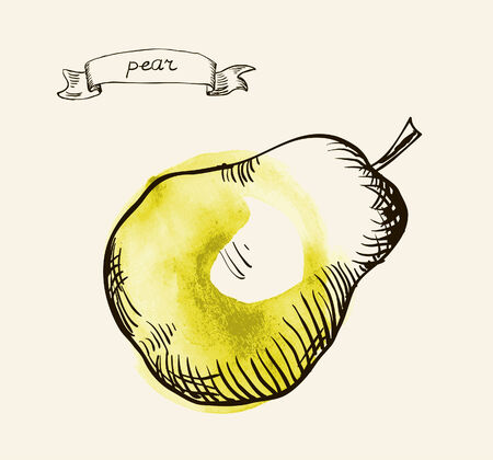 flavorful: Vector watercolor hand drawn vintage illustration of pear Illustration