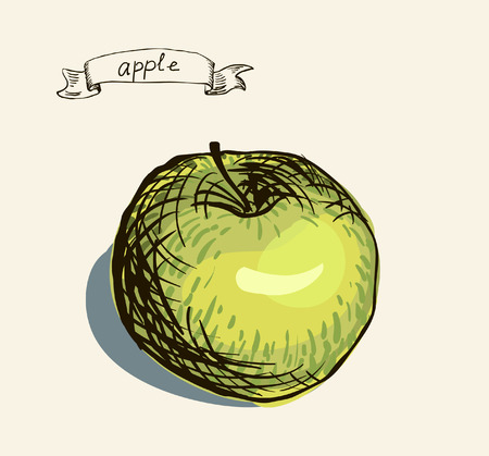 Vector watercolor hand drawn vintage illustration of apple