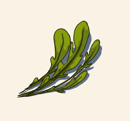 Rucola leaves  Illustration