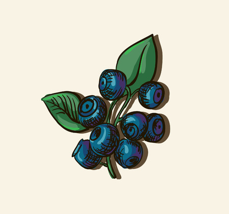 illustration of blueberries