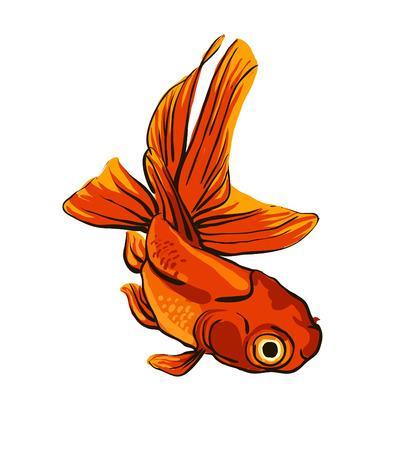 ocean fish: Bright vector illustration with koi fish Illustration