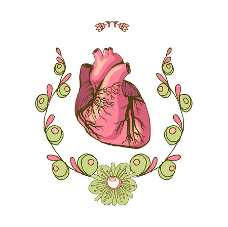 Vector drawing of the heart, anatomical Vector