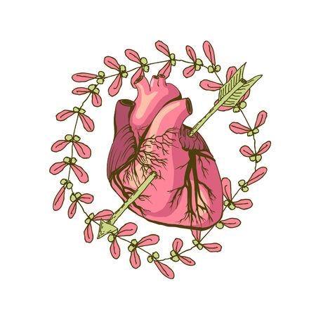 ventricle: Dibujo vectorial de coraz�n, anat�mica Vectores