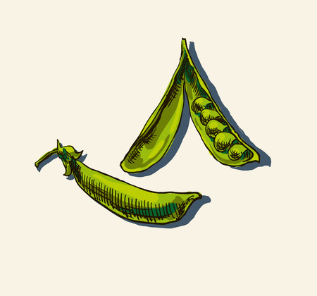 Fresh peas in pod vector illustration