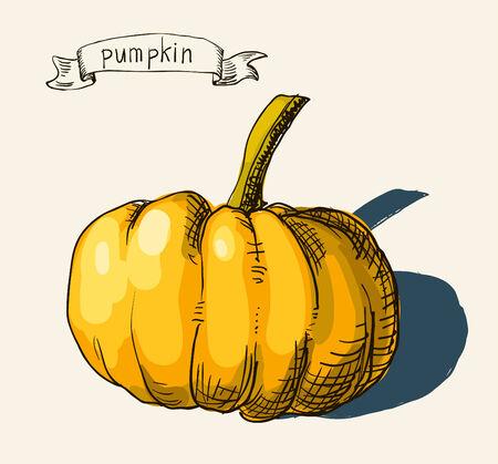 Vector watercolor hand drawn vintage illustration of pumpkin Vector