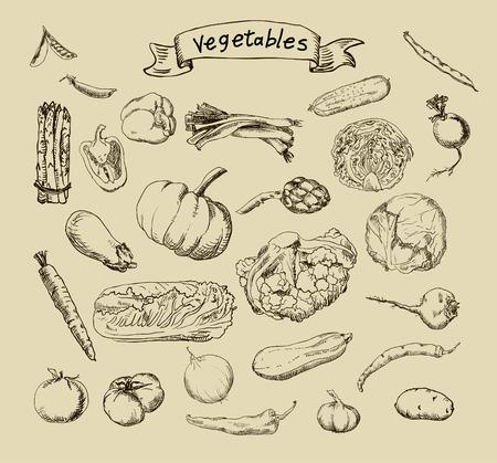 手描きの野菜の一連の図