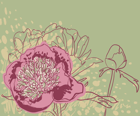 Vector decorative image peony flowers Vector