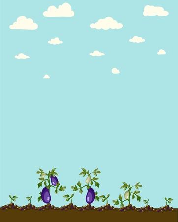 aubergine:  An isolated eggplant and a half Illustration