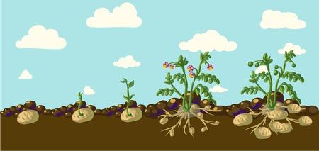 ジャガイモ植物  イラスト・ベクター素材