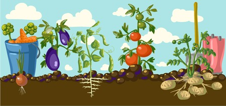 Vintage garden banner with root veggies illustration 向量圖像