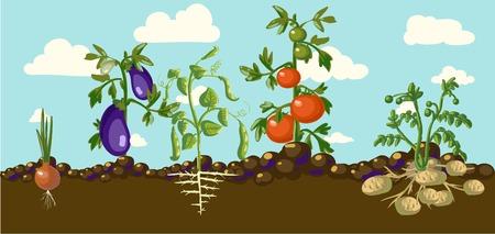 뿌리 채소 일러스트와 함께 빈티지 정원 배너 일러스트