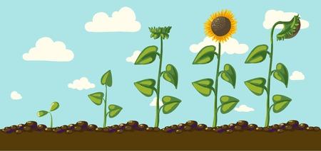 pedicle: sunflower flower illustration Illustration