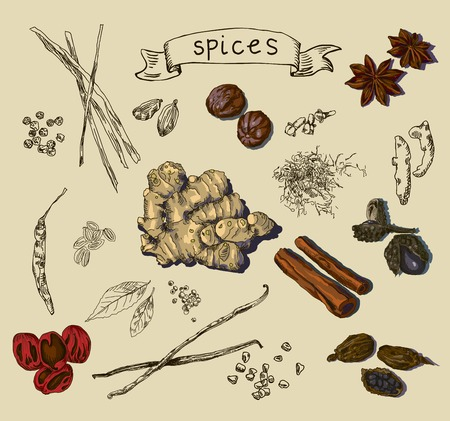 tuber: Vector illustration background with hand drawn spices Illustration
