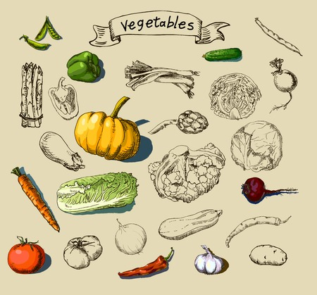 Vector illustration of a set of hand-painted vegetables,