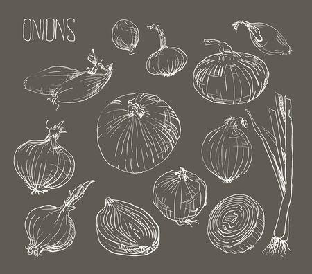 onion rings: illustration of retro organic Onions set Illustration
