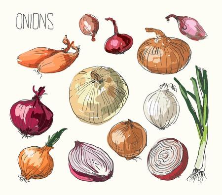flavorings: illustration of retro organic Onions set Illustration