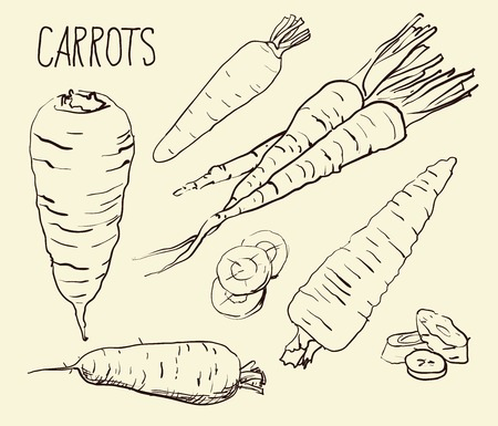 haulm: Set simple sketch icons carrots isolated on white background. Vegetables. Food. Hand drawn vector Illustration