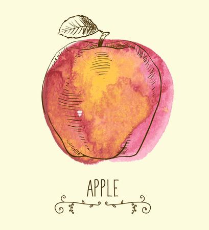 useful: fresh useful eco-friendly apple vector illustration Illustration