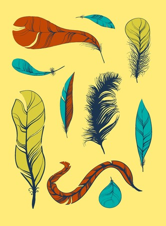 plumage: Vector decoration graphics, Set of Sketch Plumage