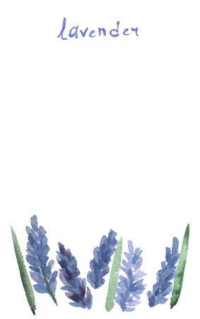 Vector watercolor lavender with blue bright watercolor ribbon. Vector