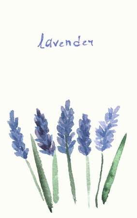 Vector watercolor lavender with blue bright watercolor ribbon. Illustration