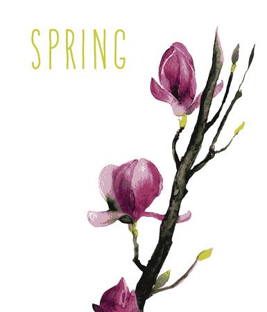 magnolia: beautiful illustration Hand Painted Watercolor of Magnolia flowers