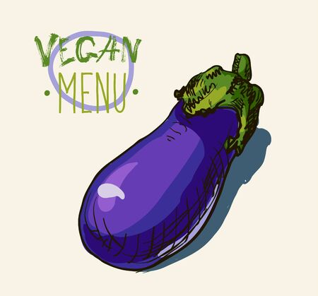 unpeeled: Vector watercolor hand drawn vintage illustration of eggplant