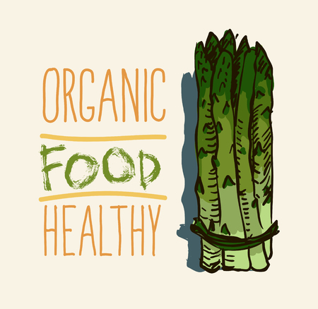 Vector watercolor hand drawn vintage illustration of asparagus