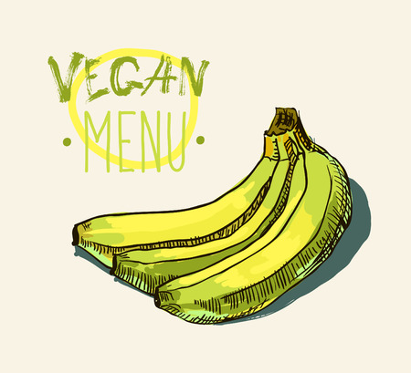 primate biology: Vector watercolor hand drawn vintage illustration of banana Illustration