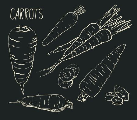 carrots isolated: Set simple sketch icons carrots isolated on white background. Vegetables. Food. Hand drawn vector Illustration