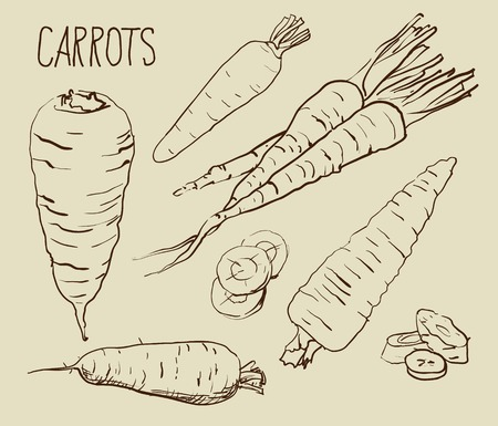 halm: Set simple sketch icons carrots isolated on white background. Vegetables. Food. Hand drawn vector Illustration