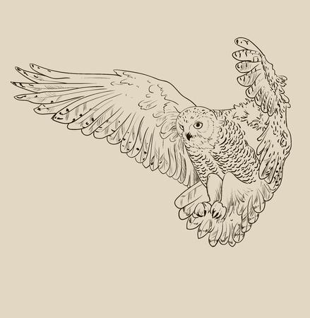 Búho dibujado a mano, ilustración vectorial aislado en blanco y negro Ilustración de vector
