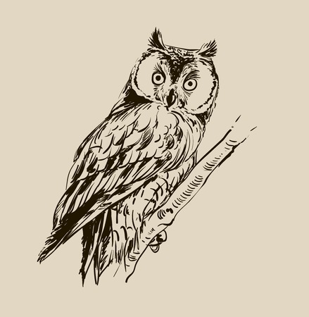 birds on branch: Owl hand drawn, black and white isolated vector illustration