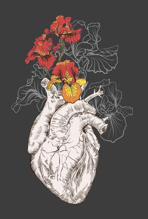 Dibujo Corazón humano con flores de fondo. vector Foto de archivo - 46722925