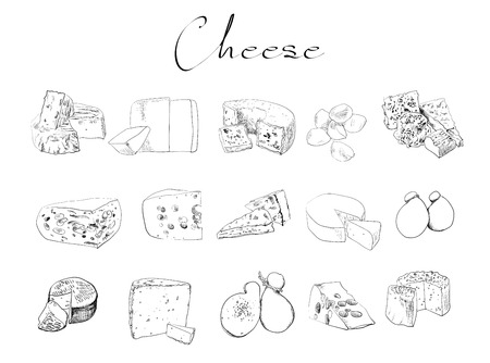 vector cheese sketch drawing designer template. farm food collection natural eco food