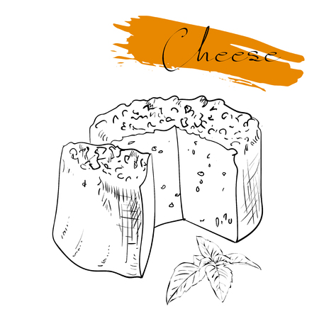 edam: Cheese types. Delicious fresh cheese variet cheese making various types of cheese of vector cheese Vector organic food illustration. on a white background