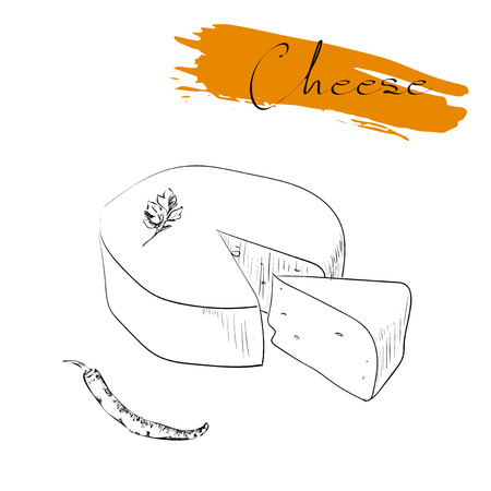 Cheese types. Delicious fresh cheese variet cheese making various types of cheese of vector cheese Vector organic food illustration. on a white background
