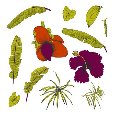 Hand drawn of tropical plants banana leaves and flower