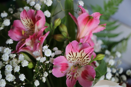 Beautiful flowers of Peruvian lily ALSTROEMERIA PLANT