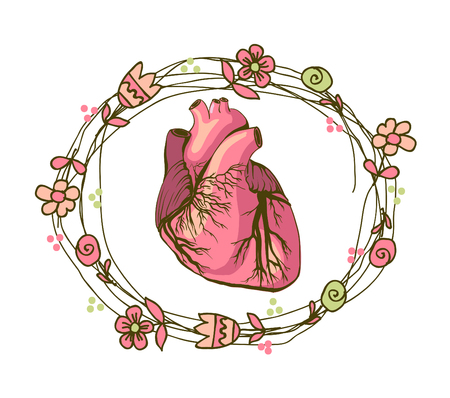 vector drawing of the heart, anatomical Illustration