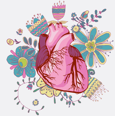 vector drawing of the heart, anatomical Ilustração