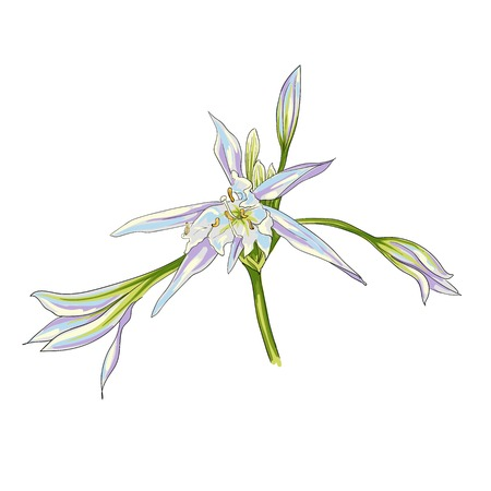 Hand Drawn Flowers Lilies on a white background. Isolated vector illustration in line art style.