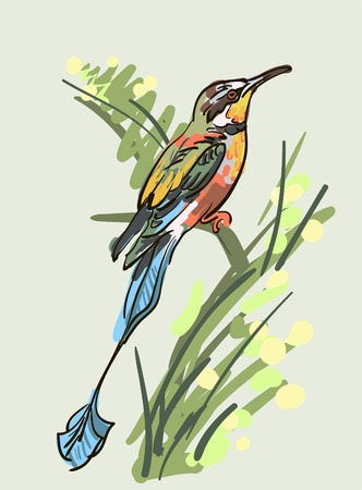 Vector drawing of the bird