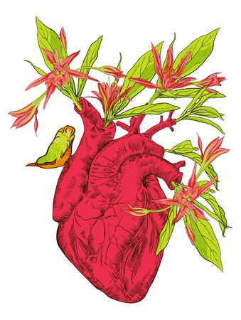Human heart with flowers Illustration